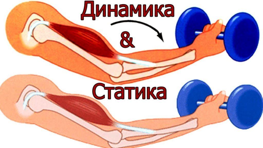 Отличия динамических упражнений от статических